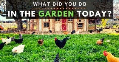 What Did You Do In The Garden Today?