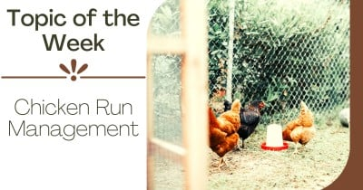 Topic of the week - Chicken Run Management