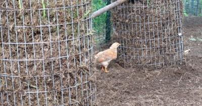 Chicken Food Tower