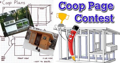 Official BYC Coop Page Contest #12